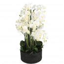 Phalaenopsis plant viola 19 branches, D38cm, H90cm